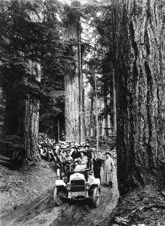 RAINIER NATIONAL PARK Washington State. A caravan of automobiles carrying tourists