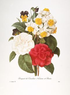 REDOUTE: BOUQUET, 1833. /nCommon camellia (Camellia japonica), narcissus (Narcissus