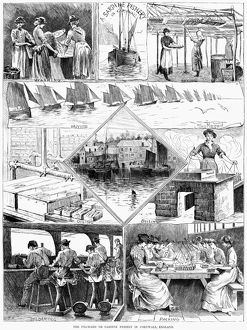 SARDINE FISHERY, 1880. Scenes from a sardine fishery in Cornwall, England. Engraving