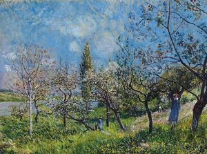 fine art/sisley orchard spring oil canvas alfred sisley