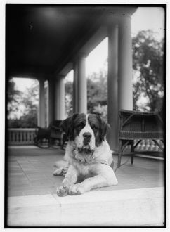 ST. BERNARD, c1920. Orville Wright's St. Bernard, Scipio, on the porch in Dayton, Ohio