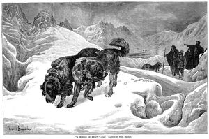 ST. BERNARD DOGS. St. Bernard dogs serving as guides in the Alps. Wood engraving