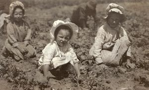 agriculture/sugar beet workers 1915 child siblings working
