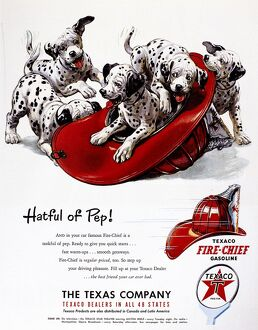 TEXACO ADVERTISEMENT, 1951. American advertisement for Texaco Fire Chief gasoline, 1951.