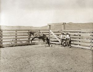anthropology/texas cowboys c1907 cowboys breaking horse