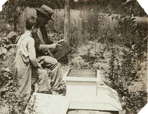 VERMONT: BEEKEEPERS, 1914. A man teaches his son how to tend to a beehive, in Bennington