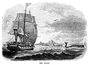 WHALING, 1855. 'The Chase.' An American whaling ship approaching a pod of whales