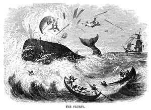 WHALING, 1855. 'The Flurry.' A harpooned whale destroys one of the rowboats