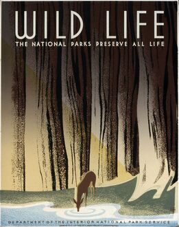 WILD LIFE POSTER, c1940. National Parks Service poster, c1940, promoting wild life