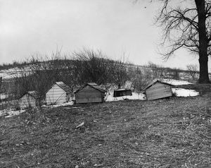 WINNEBAGO GRAVES, 1920. Graves, in the form of small wooden huts, by the side of