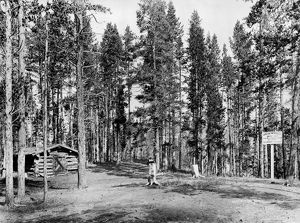 WYOMING: LOG CABIN, c1913. A log cabin in the woods with a marker indicating where U