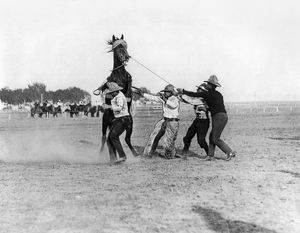 WYOMING: RODEO, c1910. Four cowboys taming a bucking bronco during the Cheyenne