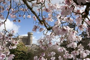 Caerhays Castle with its Magnolias and Camellias. 4