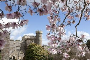 Spring Time at Caerhays Castle with its Magnolias and Camellias. 2