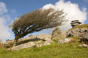Windswept stones on Bodmin Moor 2