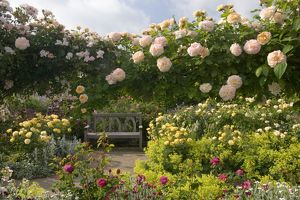The Shrub Rose Garden