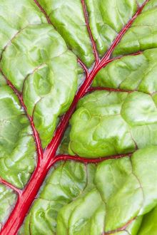 Swiss Chard 'Bright Lights'