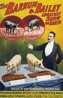 Barnum & Bailey 1900s slogans greatest show on earth performing pigs entertainers baileys