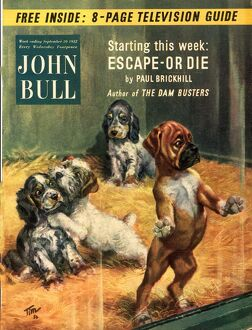John Bull 1952 1950s UK dogs pet shops pets magazines