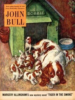 John Bull 1952 1950s UK dogs puppies pets magazines puppyA•s