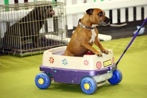 Weird, Wild and Wonderful pets at the London Pet Show, Earls Court, London