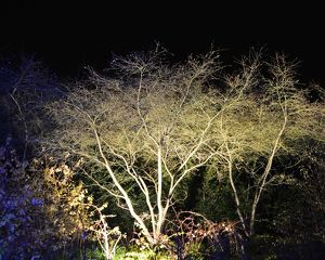 CJ5 6682 Illuminated tree