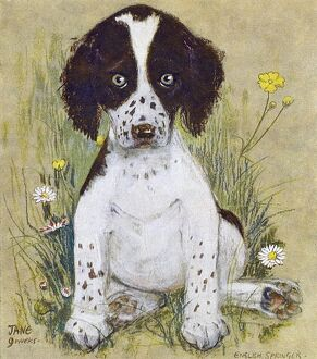 English Springer Spaniel by Muriel Dawson