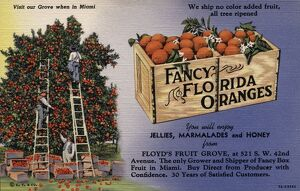Advertisement for Fancy Florida Oranges. ca