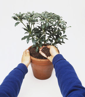 Adding soil to a potted plant