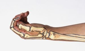 Arm with bone structure painted on skin