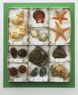 Assorted sea shells displayed in a tray, view from above.