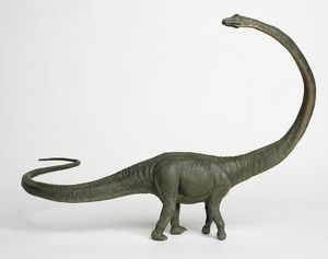Barosaurus with long curved neck.