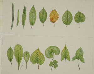 Botany: different types of leaves. Illustration
