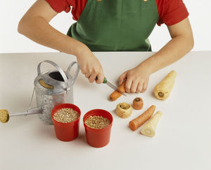 Child preparing carrots and parsnips for potting; cutting tops from carrots,