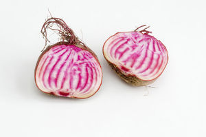 Cross section of beetroot (Chioggia)