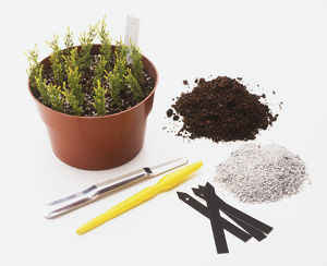 Cuttings in a pot, compost, fertiliser, labels and tools