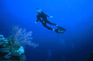 Diver swimming close to Coral