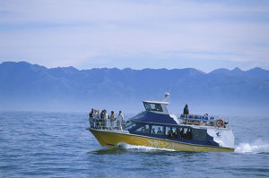 travel/eco tourism boat waters off kaikoura coast looking