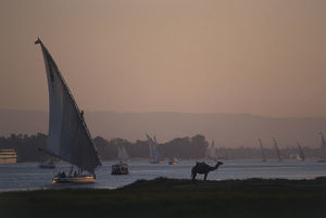 Egypt, Luxor, felucca boats on the River Nile and a single camel on the shore at sunset
