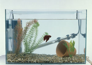 Fish tank for ailing fish with simple filtration system, plastic plant, thermostat