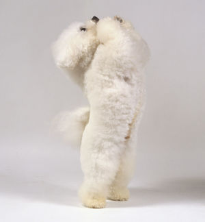 A fluffy white bichon frise balances on its hind legs with its forepaws raised imploringly