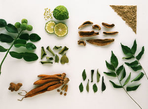 Forms of the Spices: Kaffir Lime, Lesser Galangal, Kempferia Galangal, Mango Powder
