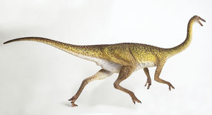 Gallimimus, side view