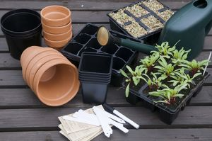 Gardening equipment, including terracotta pots, labels, seed trays, beetroot seedlings
