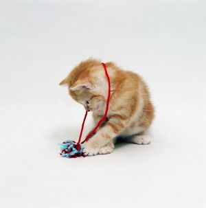 Ginger kitten playing with wool