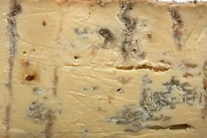 Gippsland Blue cow's milk cheese from Australia
