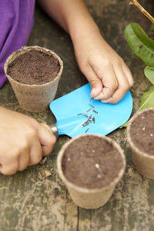 Girl's hands planting long, thin seeds in small plant pots