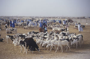 Goat Market in Africa