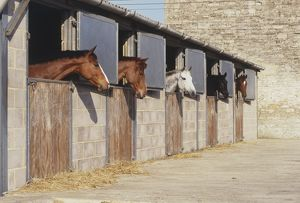 Horses in row of stables