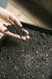 Human hand holding mixture of compost and soil